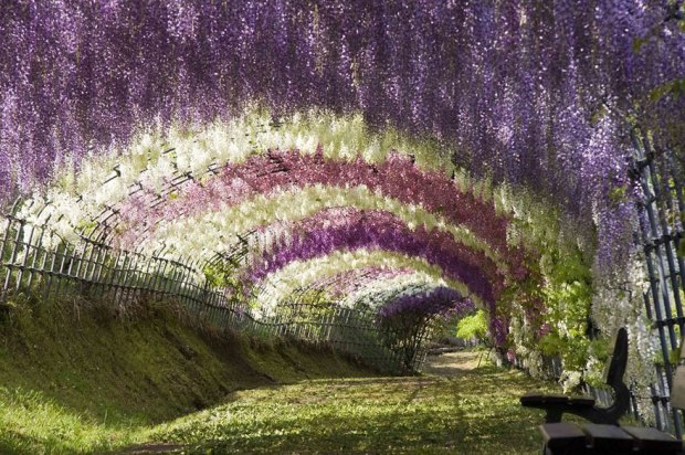 amazing-tree-tunnels-3-1