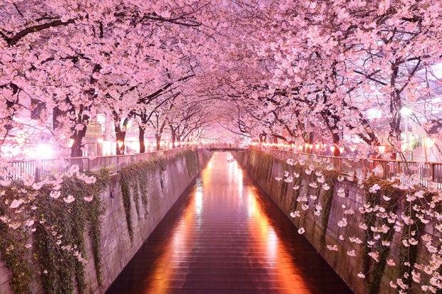 Image credits: okera japan