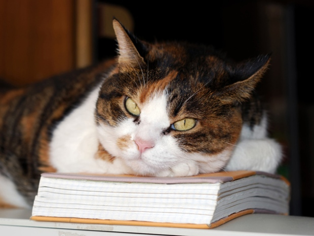 156206310-suggested-cat-care-reading-632x475