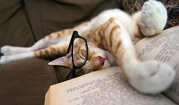 cat-asleep-reading