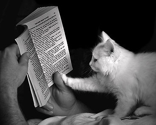 cat-reading-book_zpsac56a3dd