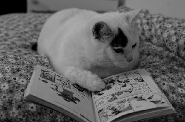 cat_books_640_03