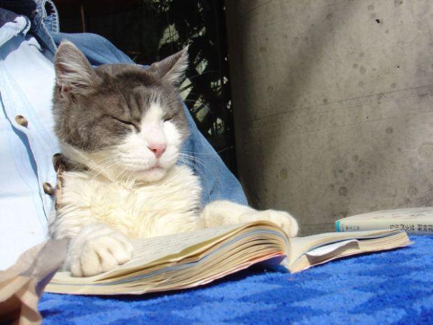 cat_books_640_06