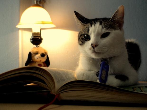 cat_is_reading__D_by_latrak