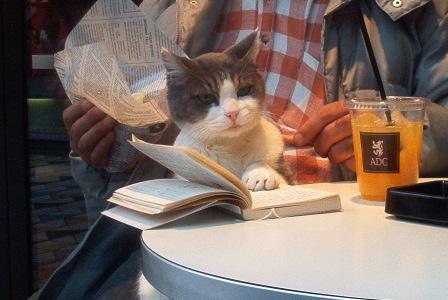 cat_reading_1