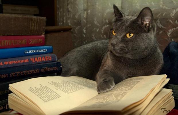 CatReadingBook(900x585)