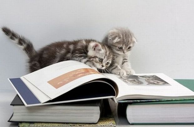cats-reading-books-18-pics-1-gif_15