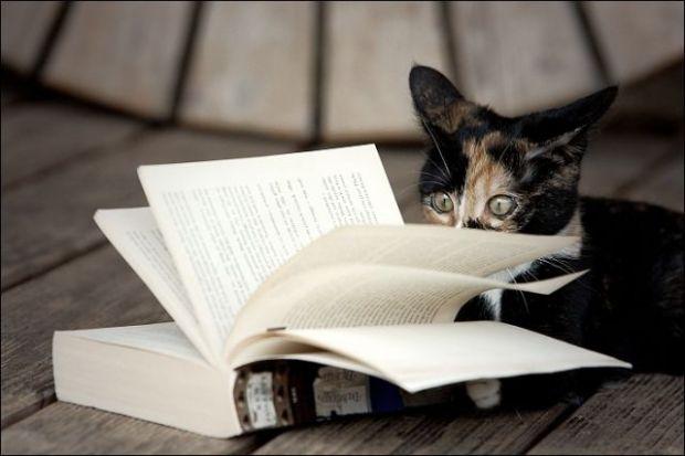 cats_also_enjoy_reading_books_18_pics_1_gif-11