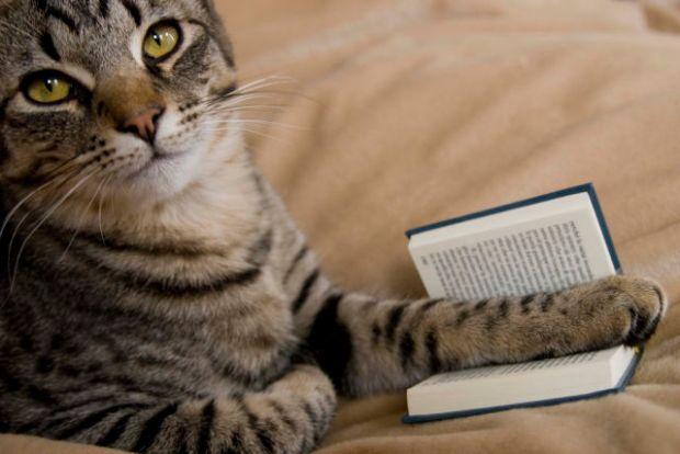 cats_also_enjoy_reading_books_18_pics_1_gif-9