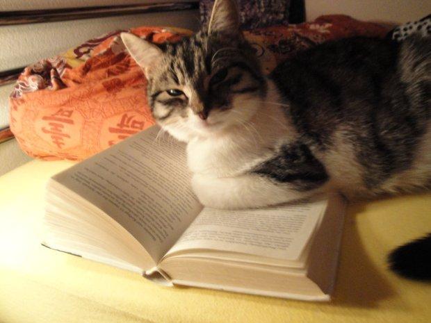 reading_cat_____by_stina_nuka_sai-d2yatvm