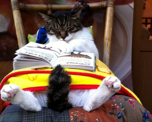 sleeping-cat-reading-book_zps78a6620c