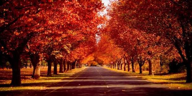 autumns_warmth_by_digitumdei