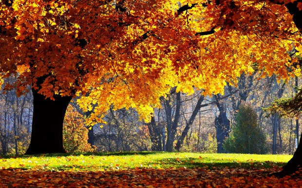 Beautiful Autumn Scenery Wallpapers 03