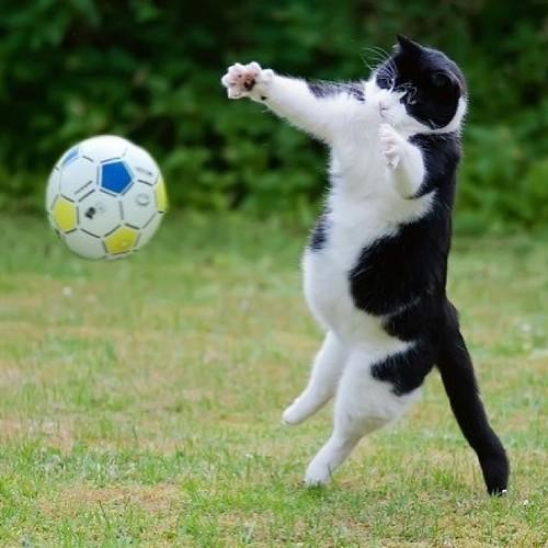 cat-playing-football