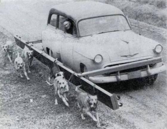 Pure dierenmishandeling. Die arme, arme honden...