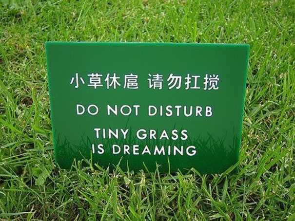 Tiny grass is dreaming.